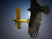 Aircraft Photo Prints - Pure Flight Print by Curtis Chapline
