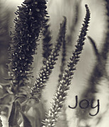 Contentment Prints - Pure Joy Print by Bonnie Bruno