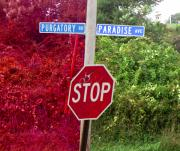 Stop Sign Mixed Media Prints - Purgatory or Paradise Print by Steven Natanson
