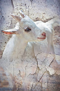 Lamb Digital Art Originals - Purity by Melissa Smith