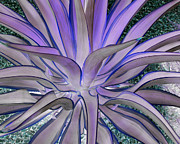 Colorized Prints - Purple Aloe Print by Rebecca Margraf