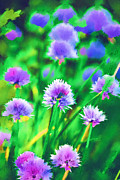 Flower Flowers Chives Garden Herbs Herb Garden Prints - Purple and Green Chive Watercolor Print by Kathy Clark