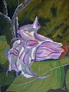 Datura Paintings - Purple Angel Trumpet- Datura Plant  by Warren Thompson