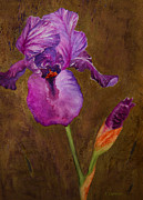 Bearded Iris Posters - Purple Bearded Iris with a Gold Leaf Textured Background Poster by Kerri Ligatich