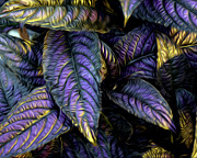 Purple Beauties Print by Anne Raczkowski