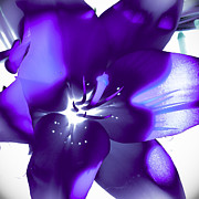 Lily Art - Purple Blast by David Patterson