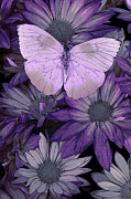 Butterfly Painting Posters - Purple Butterfly Poster by JQ Licensing