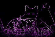 Rosa Shannon - Purple cat