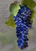 Grape Vineyard Posters - Purple Cluster Poster by Sharon Foster