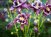 Purple Flowers Digital Art - Purple Columbines  by Cathie Tyler