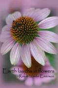 Emerson Quote Prints - Purple coneflower Print by Kyla Schnabel