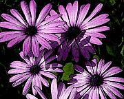 D Winston - Purple Daisies Watercolor