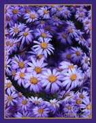 Vibrant Colors Digital Art Prints - Purple Daisy Abstract Print by Carol Groenen