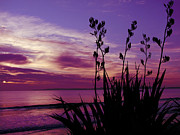 Kiwi Photos - Purple Dusk by Karen Lewis