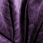 Photo Mixed Media - Purple Elephant Leaf by Bonnie Bruno