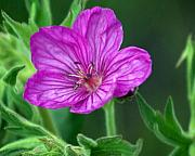 Purple Flower 2 Print by Marty Koch