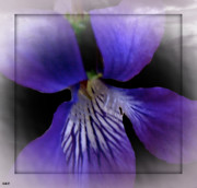 Intense Style Flower Mixed Media Posters - Purple Flower Jump Poster by Debra     Vatalaro