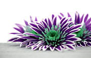 Flower Macro Prints - Purple Flower Print by Kristin Kreet