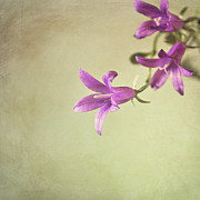 Stamen Photos - Purple Flowers by Photo - Lyn Randle