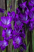 Glads Prints - Purple Gladiolus Print by Garry Gay