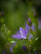 Flower Photos - Purple Glory by Mike Reid