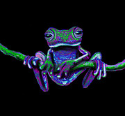 Wild Animals Mixed Media Posters - Purple Green Ghost Frog Poster by Nick Gustafson