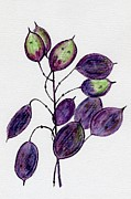 Pods Drawings Framed Prints - Purple Honesty Seed Heads Framed Print by Barbara Moignard