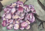Watercolour Paintings - Purple Hydrangea by Ken Powers