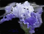 Award Digital Art Framed Prints - Purple Iris Framed Print by Donald Pavlica