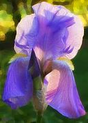 Bearded Iris Posters - Purple Iris Poster by Jeff Breiman