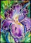 M C Sturman - Purple Iris
