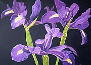 Sue Ervin - Purple Iris On Black