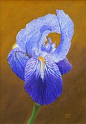 Botanical Pastels Originals - Purple Iris by Xenia Sease