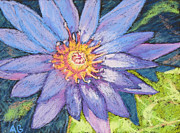 Cards Pastels Originals - Purple Lotus by Abbie Groves