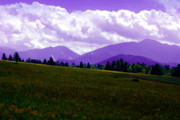 Adirondacks Photo Posters - Purple Majesty Poster by Emily Stauring
