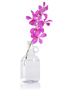 Flower Pot Photos - Purple Orchid Bunch by Atiketta Sangasaeng