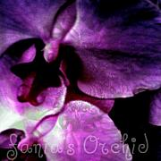 Observer Prints - Purple Orchid Print by Fania Simon