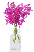 Moth Orchid Photos - Purple Orchid In Bottle by Atiketta Sangasaeng