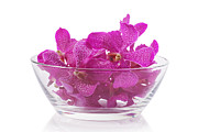 White Background Originals - Purple Orchid In Glass Bowl by Atiketta Sangasaeng