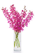 Descriptive Posters - Purple Orchid In Vase Poster by Atiketta Sangasaeng