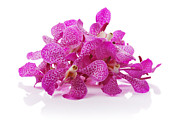 Group Originals - Purple Orchid Pile by Atiketta Sangasaeng