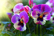 Violet Photos - Purple Pansies by Heidi Smith