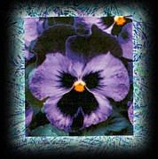 Norma Boeckler - Purple Pansies