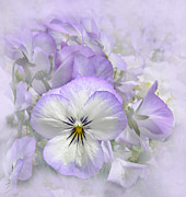 Purple Pansy Prints - Purple Pansy Floral Print by Jennie Marie Schell