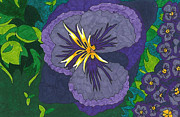 Pansies Drawings Framed Prints - Purple Pansy Framed Print by Lindsay Mangham