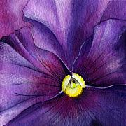 Purple Flowers Drawings - Purple Pansy by Mindy Lighthipe