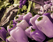 Marcie Adams Eastmans Studio Photography - Purple Peppers