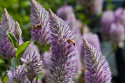 Olia Saunders Metal Prints - Purple Plants with Bees Metal Print by Design Remix