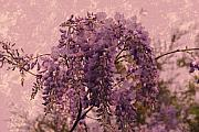 Branch Digital Art Metal Prints - Purple Pleasures Metal Print by Angie McKenzie