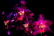 Orchids Digital Art - Purple Rain by Mindy Newman